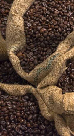 Tipos de armazenagem e especificações para um bom armazenamento do café